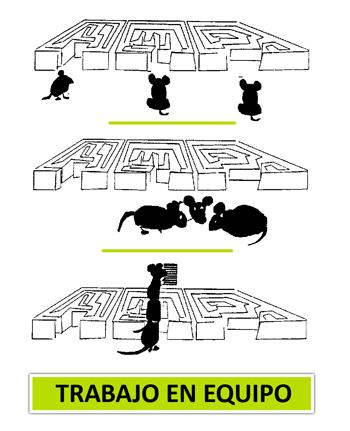 trabajo-en-equipo-ratones-laberinto